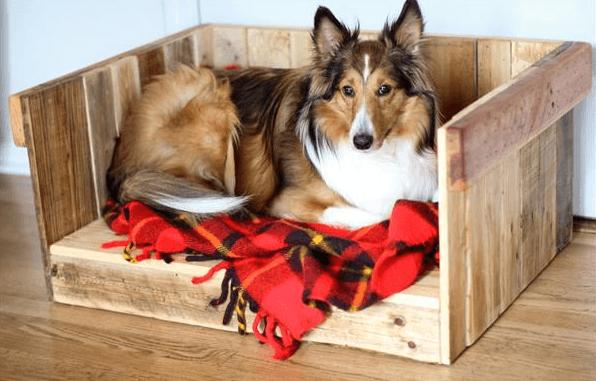 palette niche pour chien